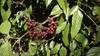 Bu meyveler kansere karşı umut vadediyor