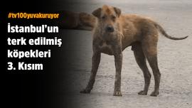 İstanbul'un terk edilmiş köpekleri - 3. kısım