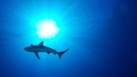 Hawaii'de köpek balığı dehşet saçtı