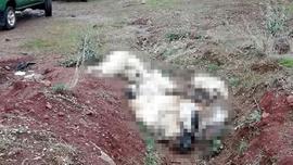 Vahşet! Üst üste atılmış köpek ölüleri bulundu