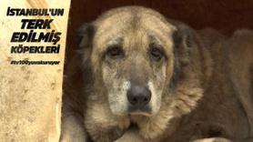 İstanbul'un terk edilmiş köpekleri - 1. kısım