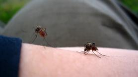 Sivrisineklerle insanoğlunun savaşı başlıyor