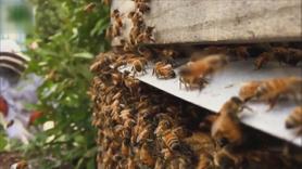 Arı sokmasına dikkat!