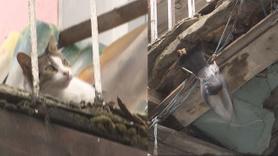 Ayağı tele takılan güvercin böyle kurtarıldı