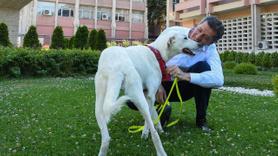 Okullara barınaktan köpek alma izni!