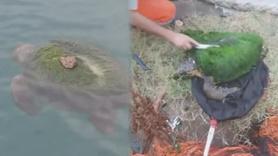 Perişan haldeydi, balıkçılar kurtardı!