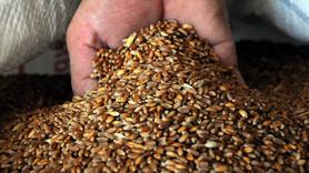 TMO stoklardan buğday ve arpa satışına başlıyor!