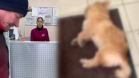 Köpeği tedavi etmeyi reddetti!