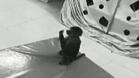 Maymun bakıcısının telefonundan alışveriş yaptı!