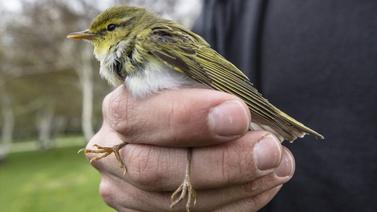 Beslediğiniz kuş katiliniz olabilir