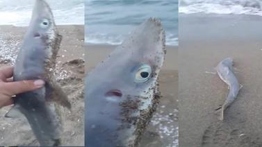 Sakarya'da oltaya köpek balığı yavrusu takıldı