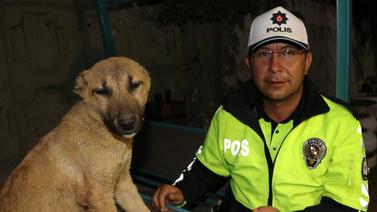 Kafasında bidonla dolaşan köpeği kurtardı