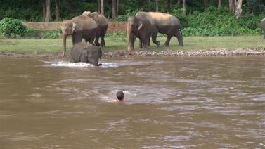Filden insanlığa örnek davranış