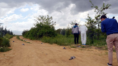 Ankara'da çinçila katliamı