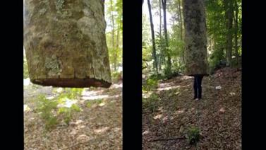 Bu ağaç havada duruyor!