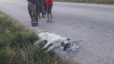9 sokak köpeğini zehirleyerek öldürdüler