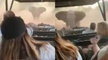 Öfkeli fil, safari yapan turistlere saldırdı