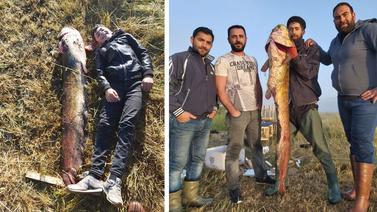 1,5 metrelik yayın balığı şaşırttı!
