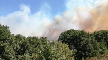 Pendik'te orman yangını korkuttu!