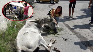 Yaralı atı izne gelen uzman çavuş kurtardı