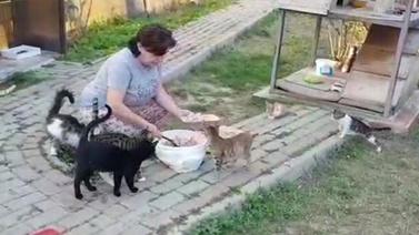 Kediyi mangalda yakıp parka bıraktılar!