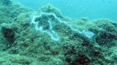 Antalya denizde 'elektrik akımı' paniği!