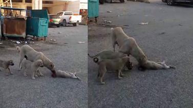 Yavrusunun başında ağlayan anne köpek yürek yaktı