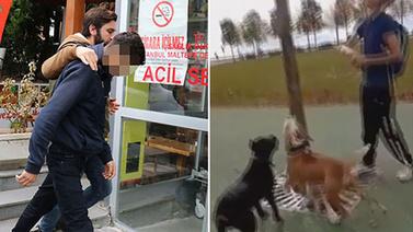 Köpeklerine kedi parçalatanların cezası belli oldu
