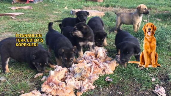 İstanbul'un terk edilmiş köpekleri - 4. kısım