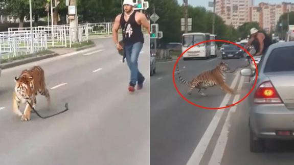Kaplan yola atladı, trafiği birbirine kattı