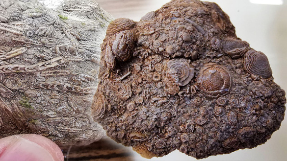 50 milyon yıllık!