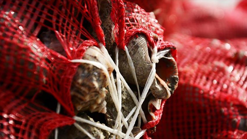Balıkçılar av yasağında yüzünü 'salyangoz'a döndü