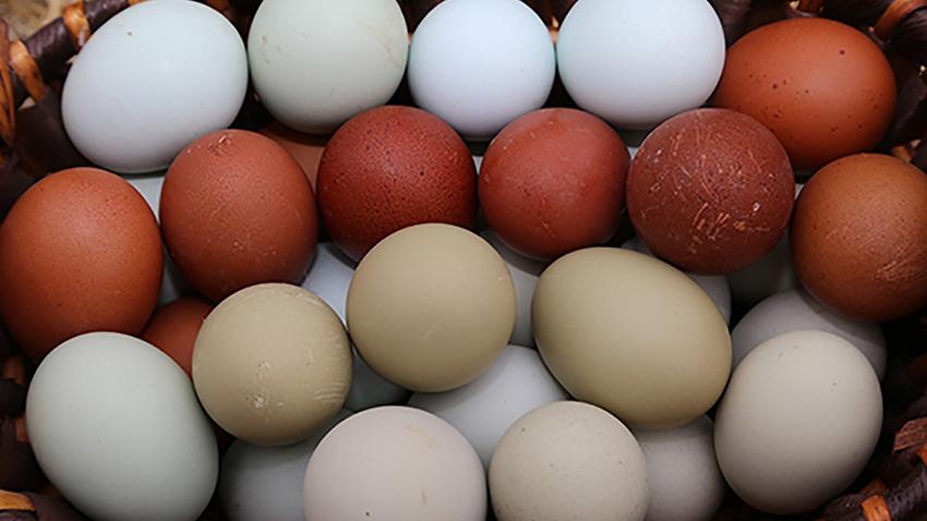 Yumurtanın kolisi 5 liraya düştü!