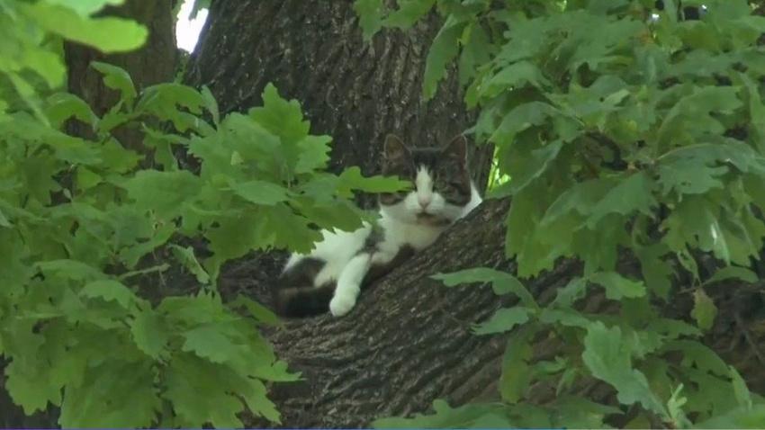 Kuşlara özenen kedi, 6 yıldır ağaçta yaşıyor