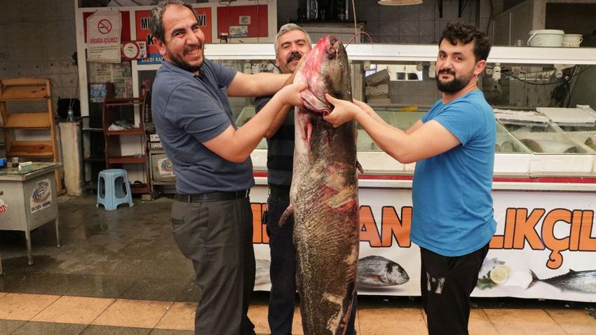Baraj gölünde yakalandı: 100 kilo ağırlığında 2 metre boyunda