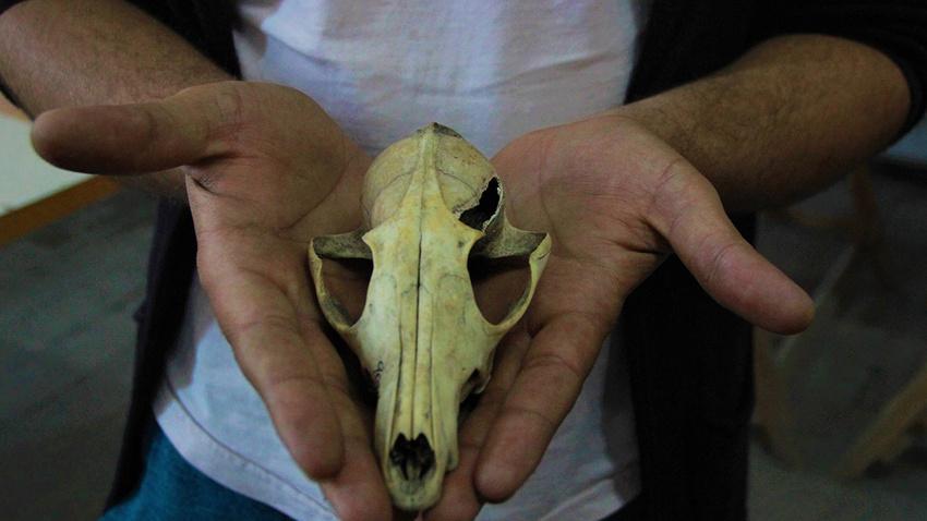 4 bin 500 yıl önce herkes köpek eti yiyormuş