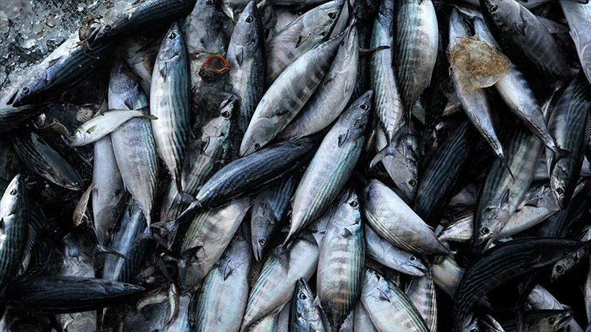 Karadenizli balıkçı palamuttan umutlu değil