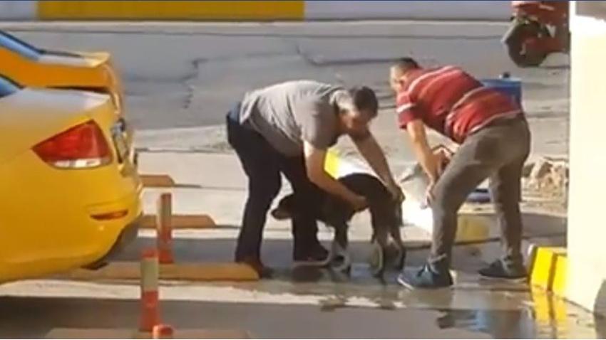 Taksiciler sıcaktan bunalan köpeği yıkadı