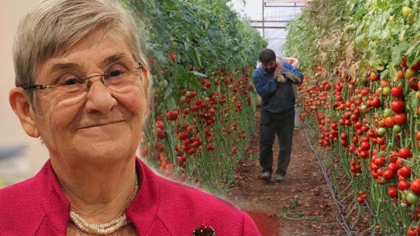 Karatay'ın sözleri domatesçileri ayağa kaldırdı