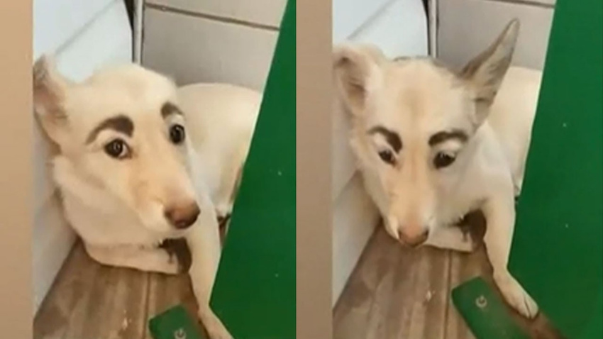 İnsan yüzlü köpek sosyal medyayı salladı