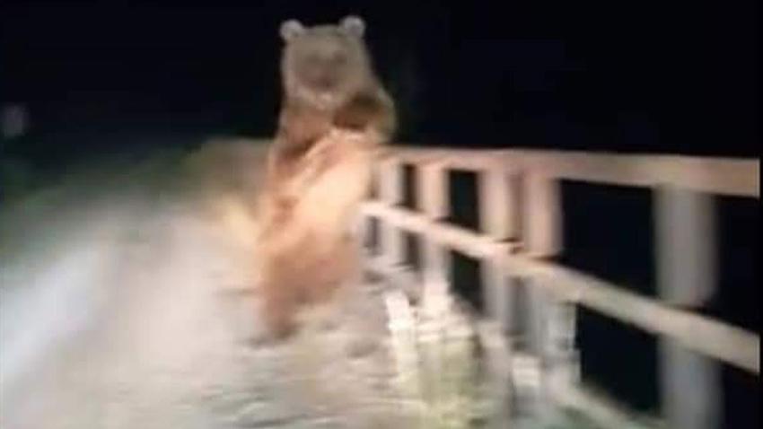 Köprüde karşılaştı!.. Böyle poz verdi!
