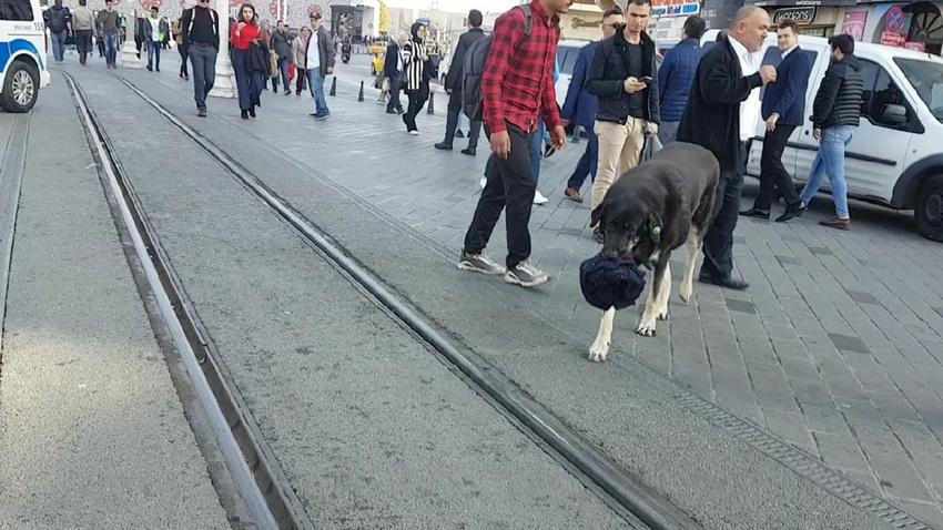 Taksim'deki köpek yine ısırdı