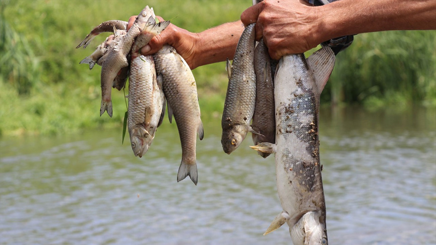 Şeytan Deresi'nde şüpheli balık ölümleri