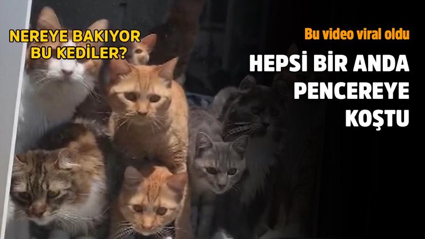 Bu kediler nereye bakıyor?