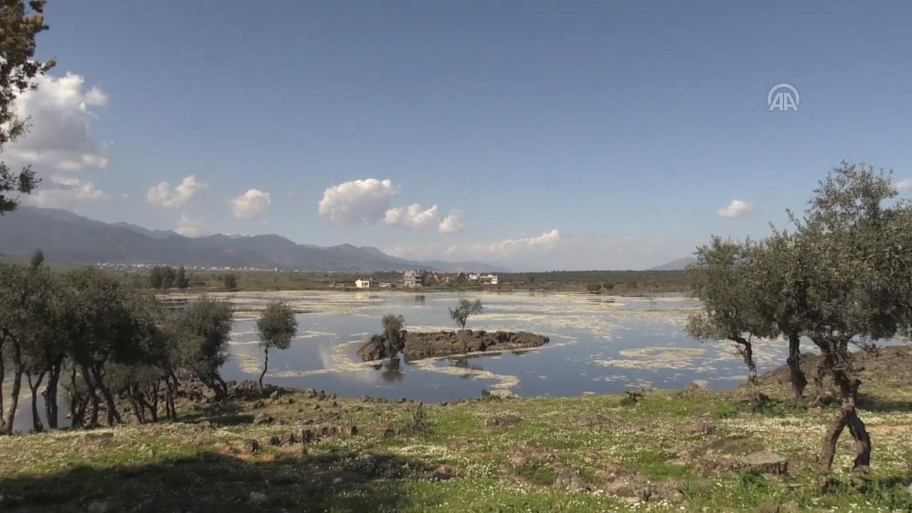 Haydarlar Gölü su papatyalarıyla büyülüyor!