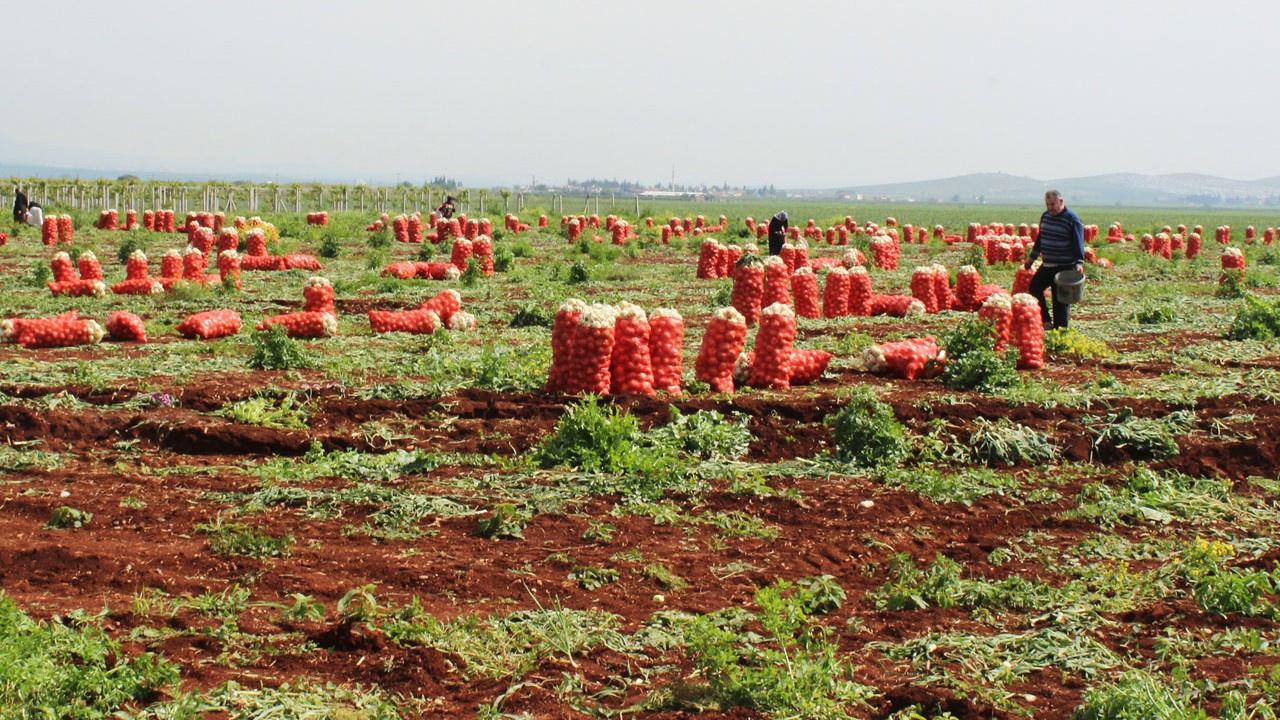 Çiftçi 1.5 liraya satıyor, tüketici 8 liraya yiyor