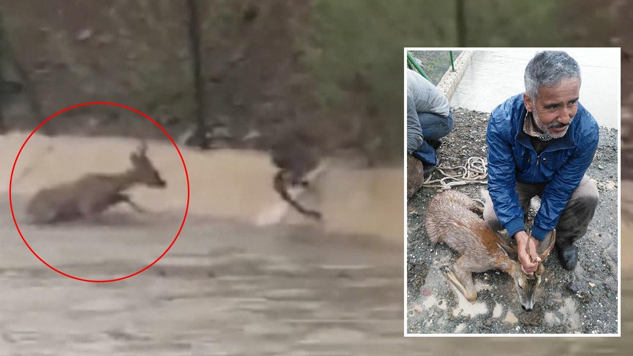 Karacalar boğulmaktan son anda kurtarıldı