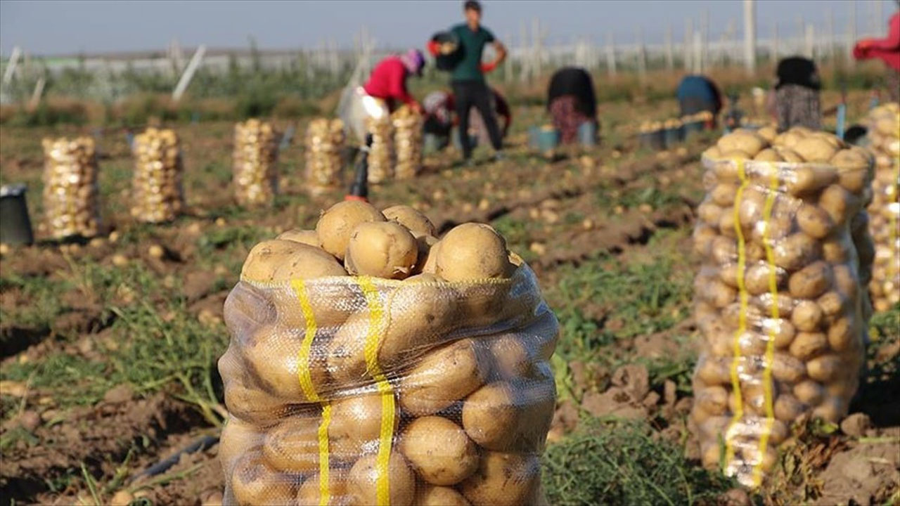Son bir yılda patates yüzde 79 zamlandı
