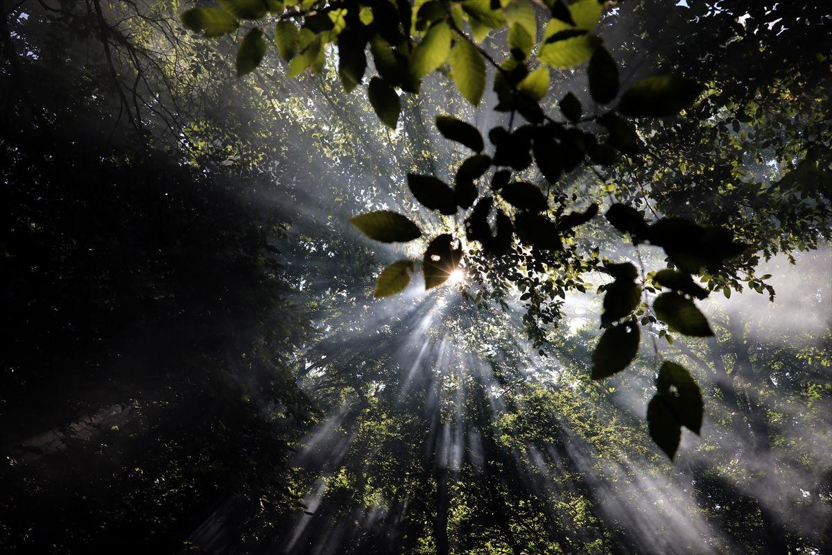 Büyüleyen bir doğa harikası: İğneada Longoz  ormanları - Sayfa 4