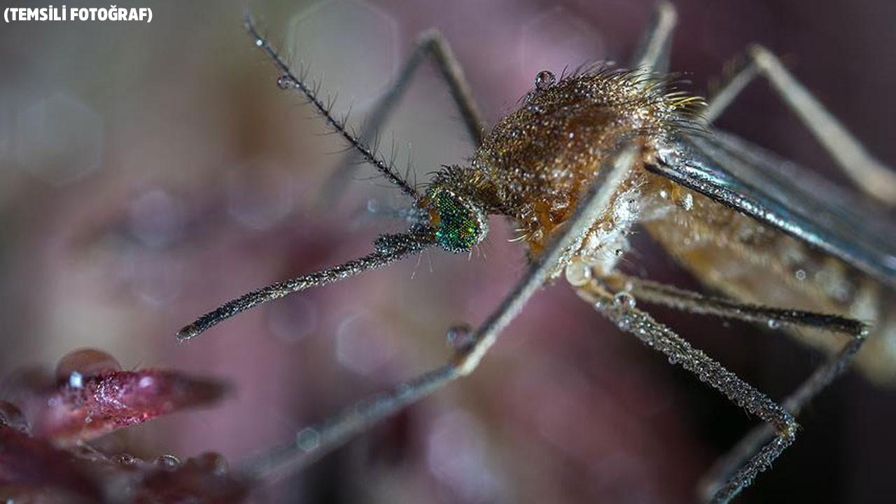 Dang hummasına karşı geliştirildi!.. Sivrisinek sivrisineğe karşı!